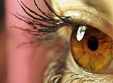 chirurgia oculistica Studio Pissarello Asti