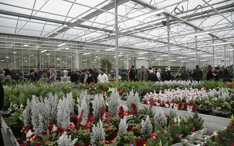 distribuzione piante ingrosso