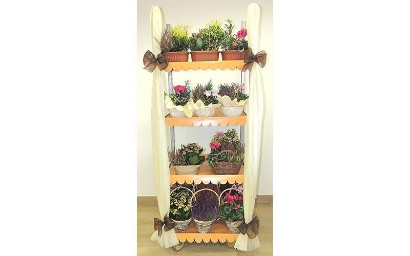 vendita piante ingrosso