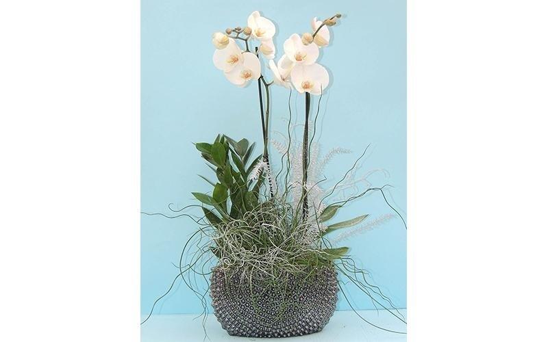 vendita fiori