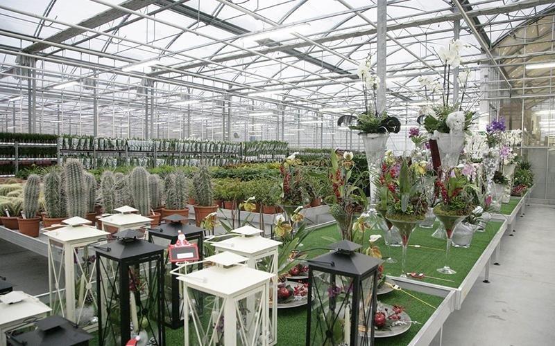 Vendita articoli floreali solarolo ra baldi piante for Vendita piante ornamentali