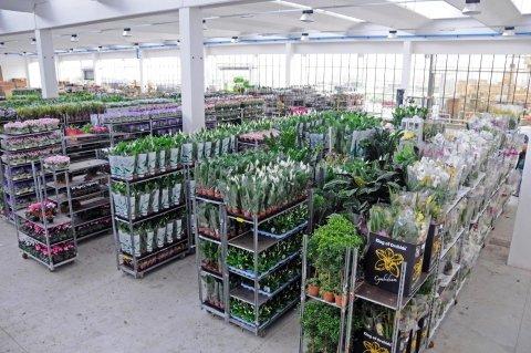 magazzino piante