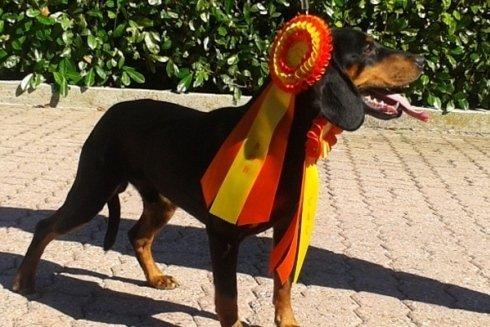 Gli animali allevati presso la struttura Z Kanci Hory sono stati premiati in molte competizioni.