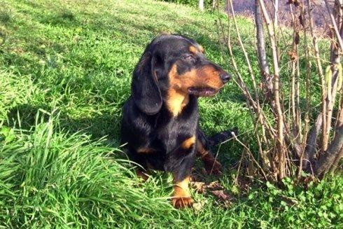 La nostra azienda offre la massima cura, soddisfacendo i bisogni primari dei cani.