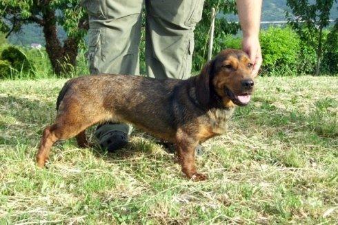 Allevatori specializzati nella allevamento di cani da esposizione.