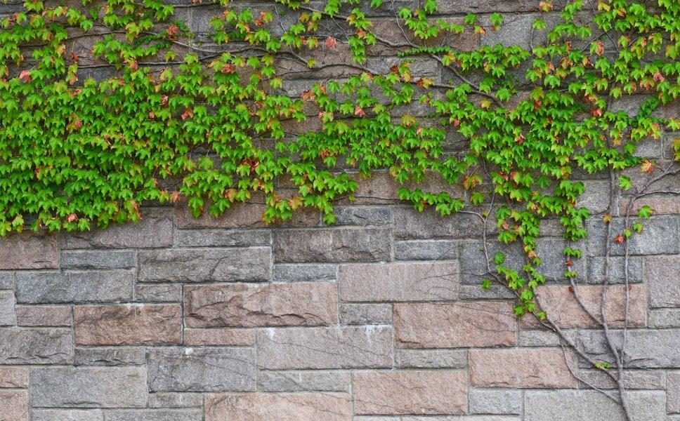 A beautiful stone wall