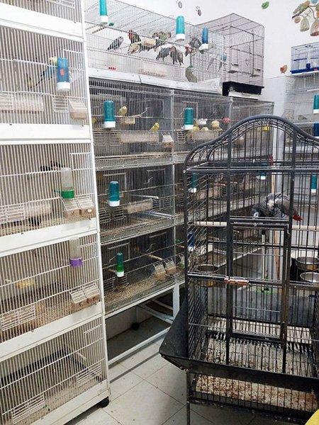 gabbie per uccelli e piccoli animali