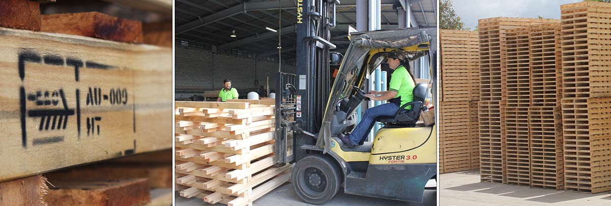 seapal pallets timber with forklift and pallets