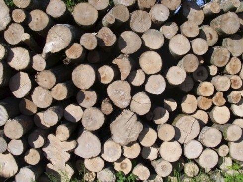 legna per camini