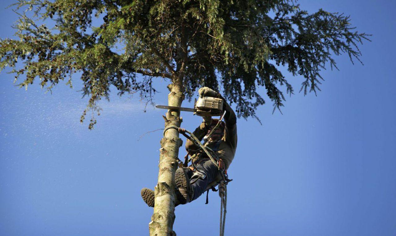 A tree service professional is just a call away in Kalispell, MT