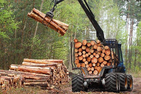 gru che carica legna