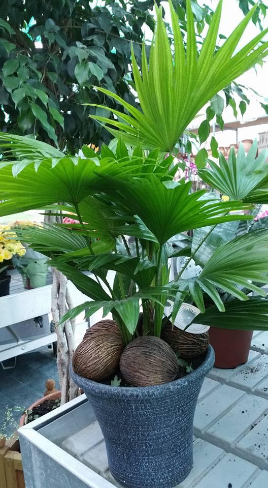 Piante da appartamento salerno sa vivaio avagliano piante for Piante da vivaio