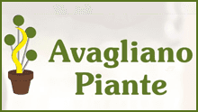 VIVAIO AVAGLIANO PIANTE - LOGO