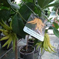 una pianta con una targhetta con scritto mano di Budda