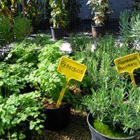 delle piante verdi in un vivaio