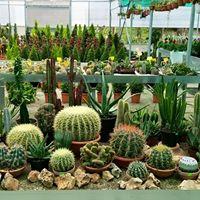 delle piantine grasse e dei cactus