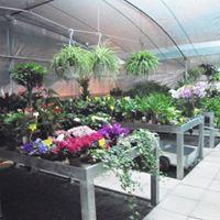 delle piante con fior colorati