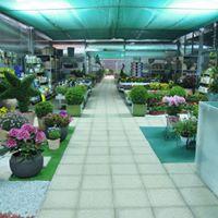 interno di un vivaio con delle piante in esposizione