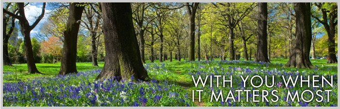 Bluebells in a calm woodland - AL & G Abbott Funeral Directors | Bedford, Milton Keynes