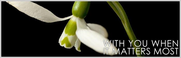 Snowdrops and green leaves - AL & G Abbott Funeral Directors | Bedford, Milton Keynes