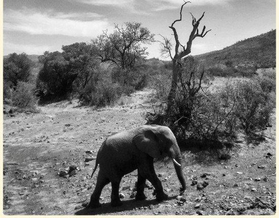 Tours South Africa Johannesburg Kruger Safari Soweto
