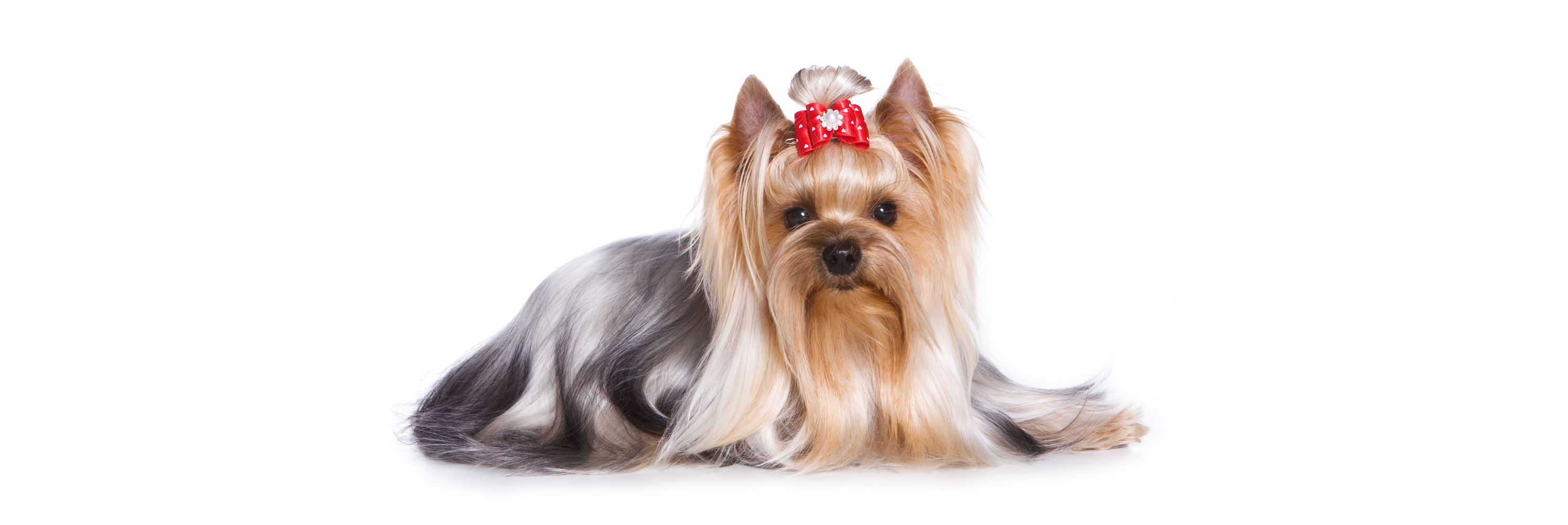 Professional pet grooming in Elk Grove, CA