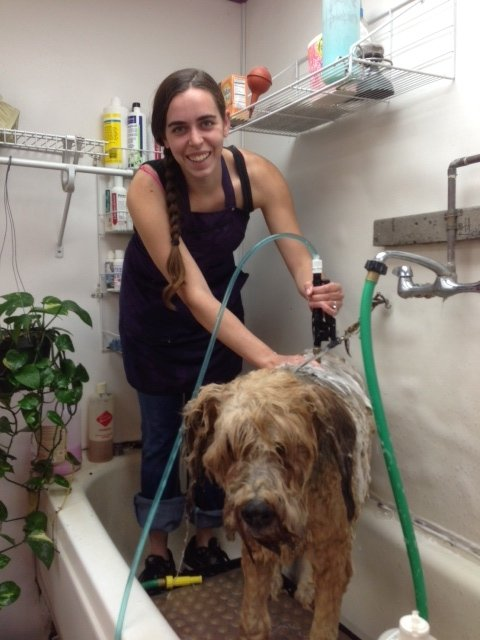 Dog being groomed by one of our professional pet groomers