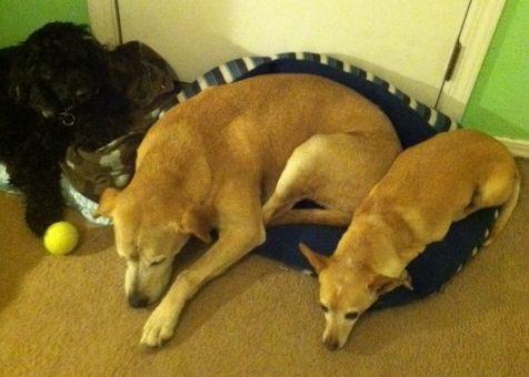 Dogs sleeping