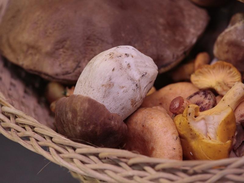 cesta ripiena di funghi
