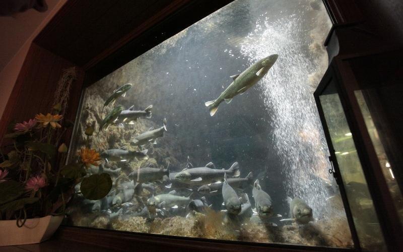 acquario interno al ristorante