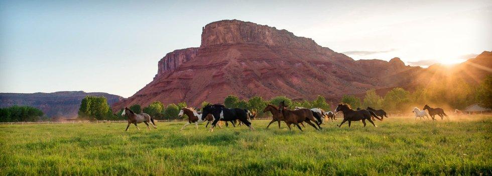 corsa dei cavalli in sorrel river ranch