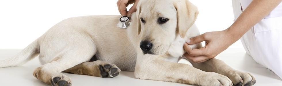 A Messina veterinario cani