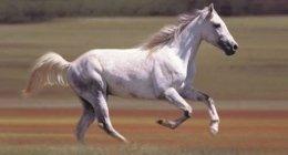 magnetoterapia, cura cavallo, patologie animali
