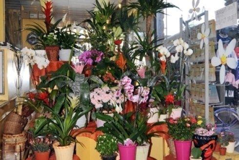 piante e fiori esposti
