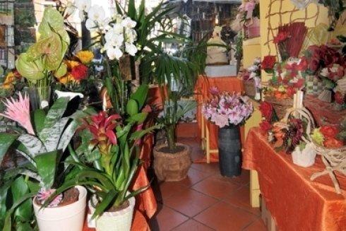 Fiori e piante in negozio