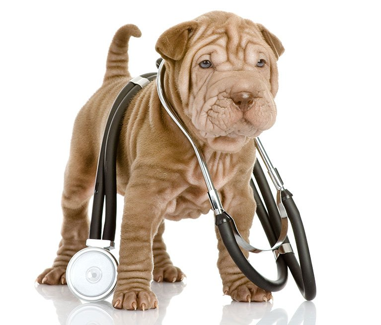 Expert Surgical Veterinary Services