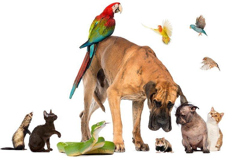 Animal Vet Surgical Procedures