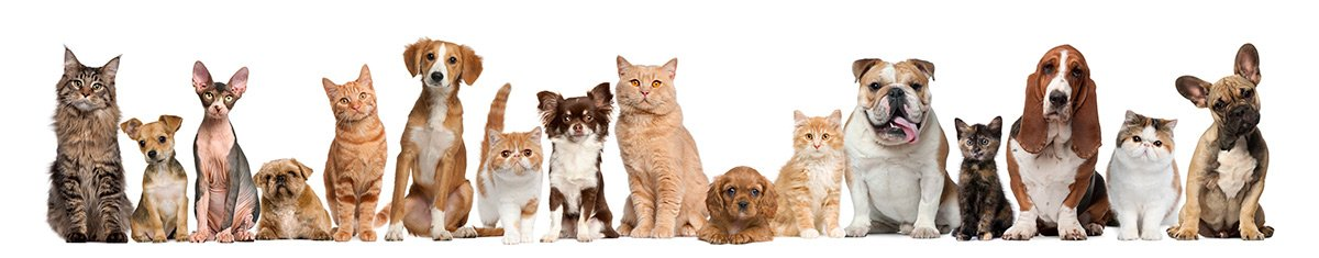 Pet Heartworm Prevention and Treatment Services
