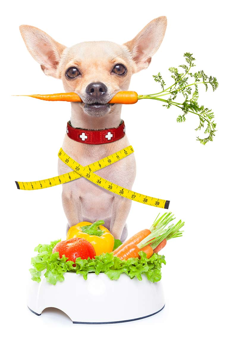 Animal Weight Loss