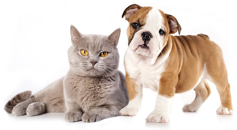 Animal Worming Services