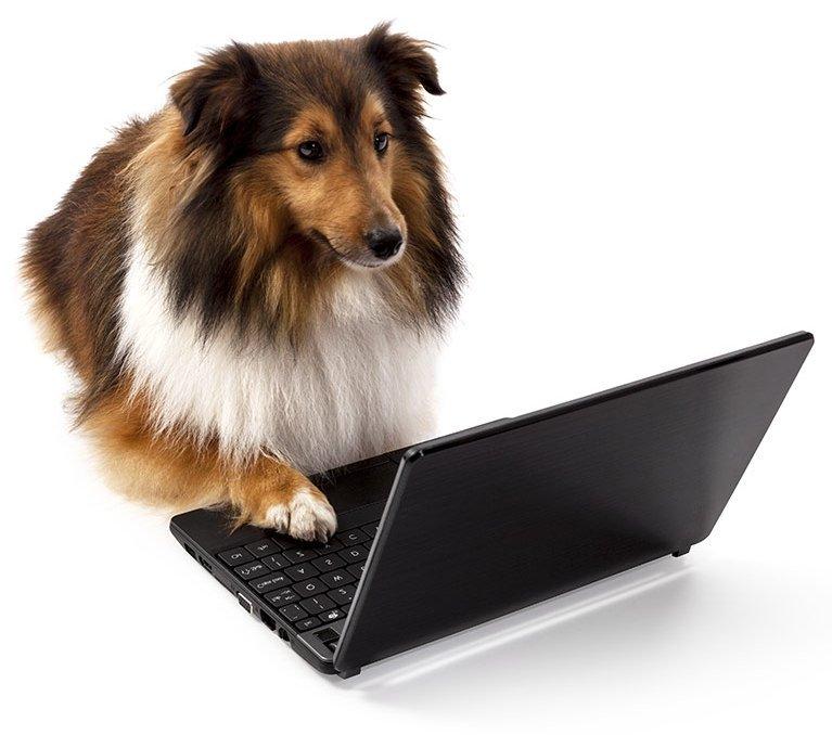 Pet Insurance Services