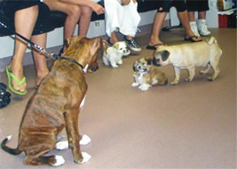 Puppy Pre-School Training