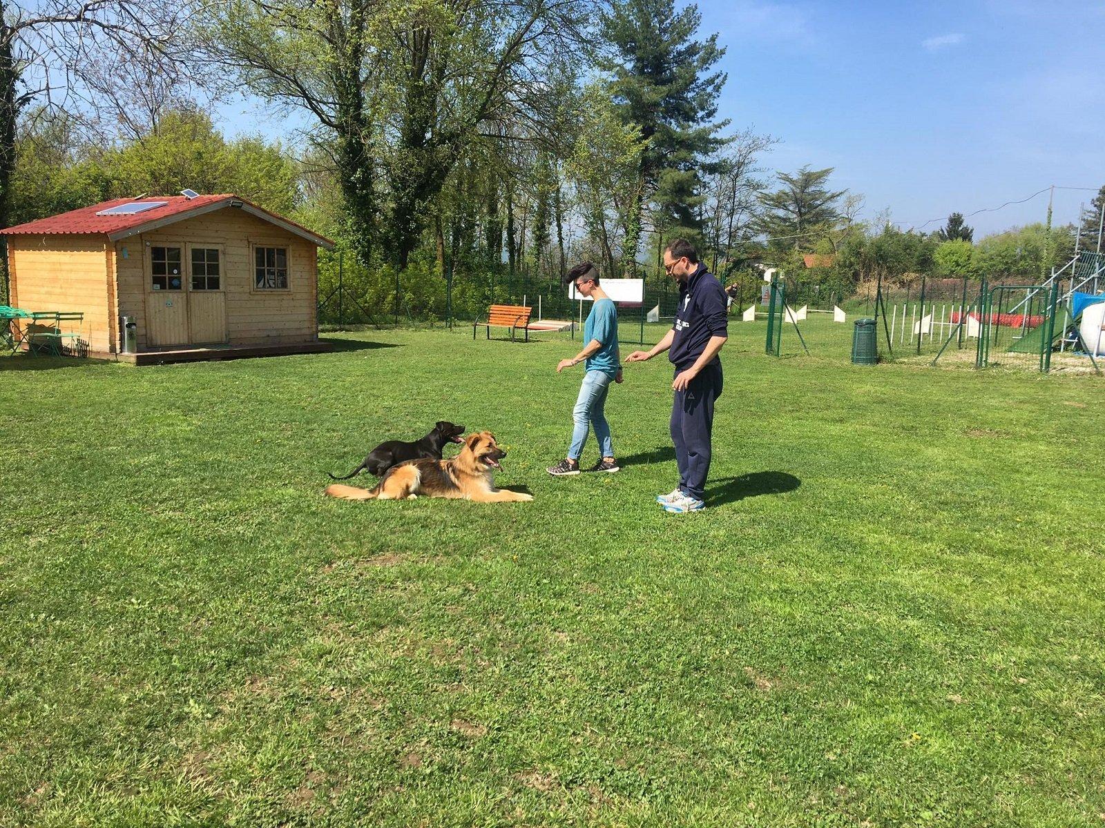 due uomini davanti a due cani sdraiati sul prato durante un addestramento