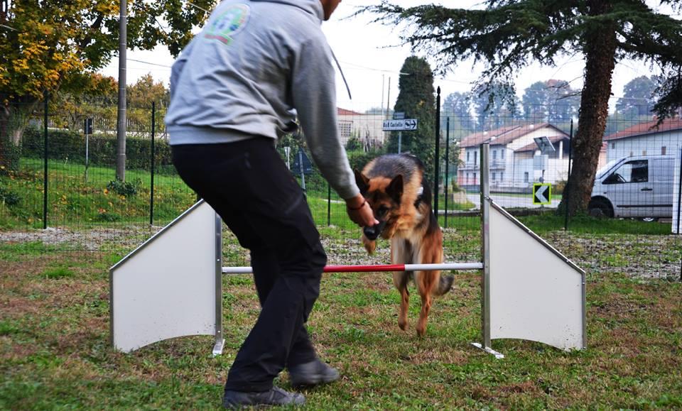 un ragazzo girato di spalle e un cane Pastore Tedesco che salta un ostacolo