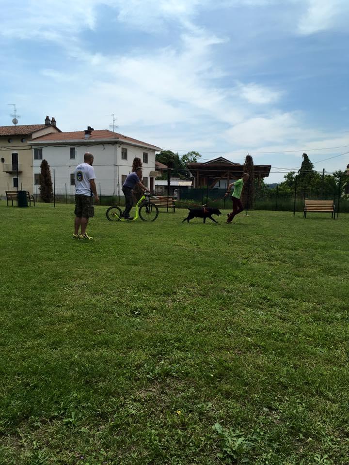 un uomo con un cane al guinzaglio che traina un'altro in bici