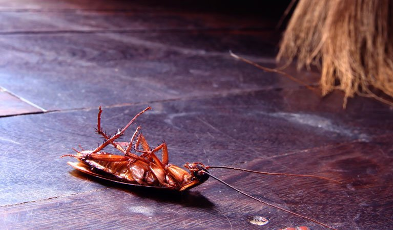 pest control Gold Coast elite maintenance service cockroach