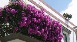 fiori per esterni