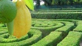 pulizia giardini, giardinaggio, giardinieri