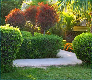 trattamenti fitosanitari, manutenzione di giardini