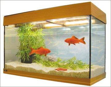 Tropical fish - Sheffield - Birley Aquatics - Aquarium